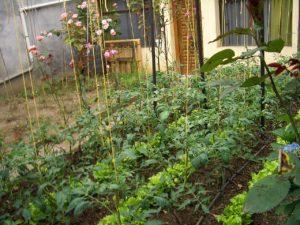 Backyard Sustainability
